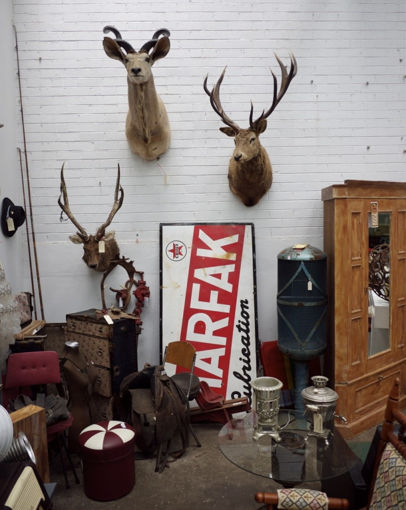Vintage Furniture - The Works Glebe - Taxidermy Deer Head