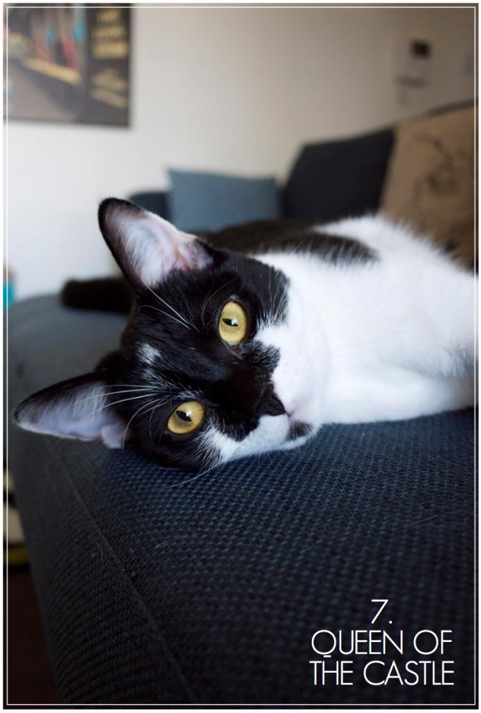 Creative Find - Emi the Cat