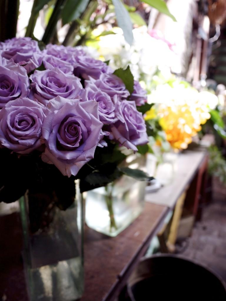 Violet Roses - Season Concepts