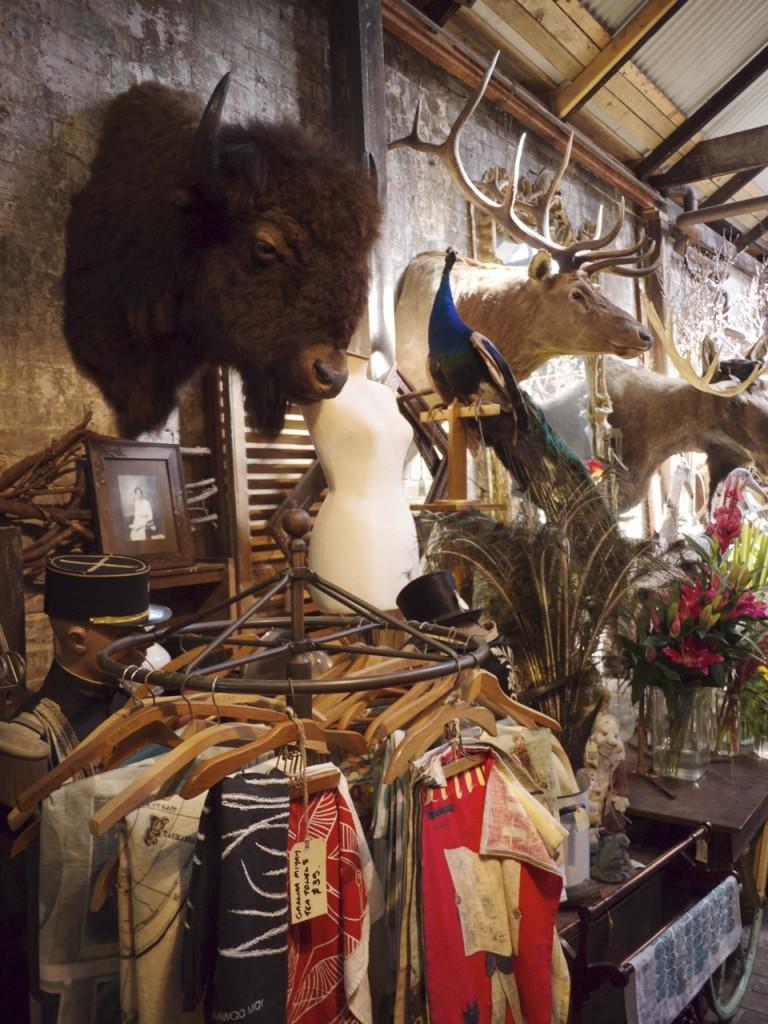 Taxidermy Buffalo Head - Seasonal Concepts