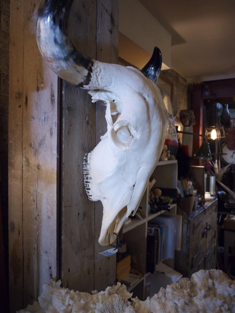 Animal Skull - Seasonal Concepts