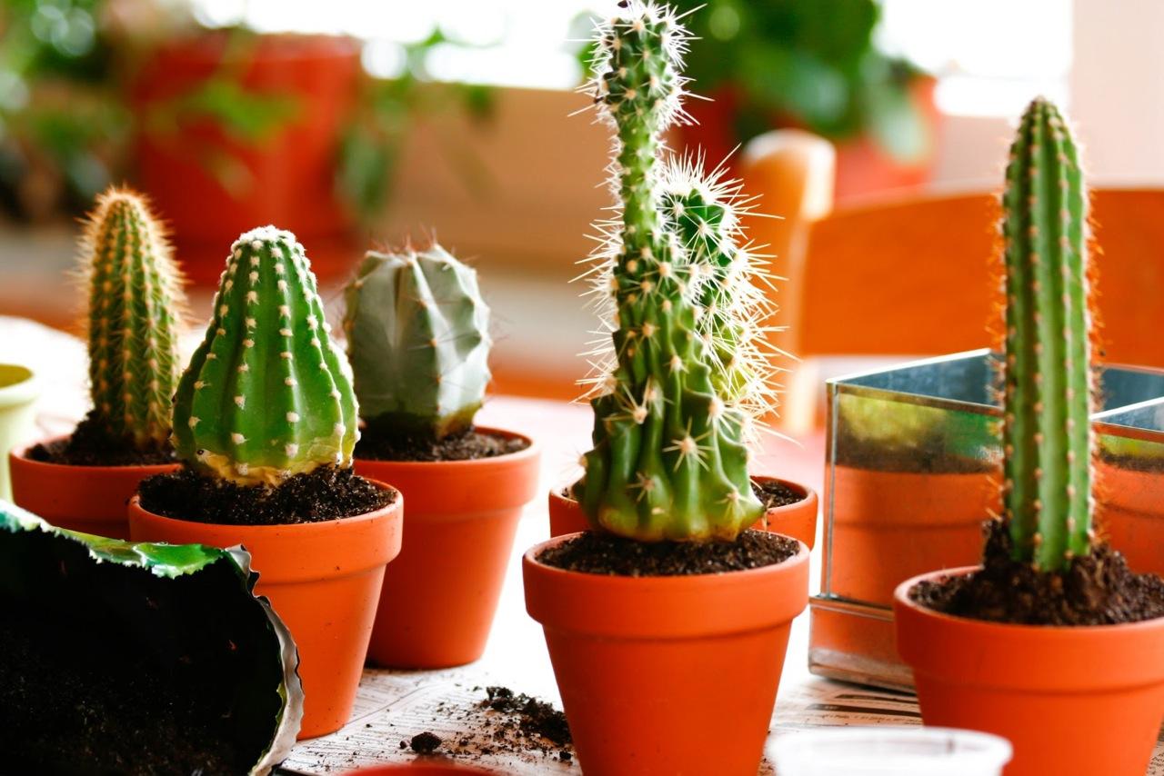 Cactus Ideas - Terracotta Pots