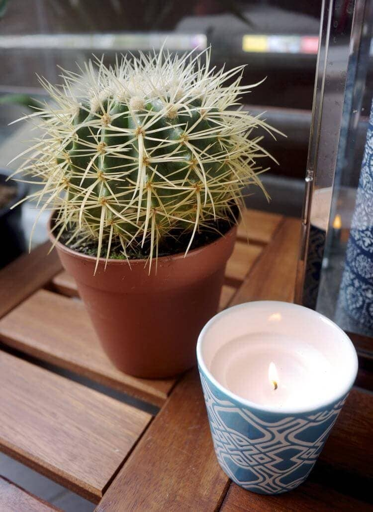 IKEA Outdoor Furniture - Cactus and Candle