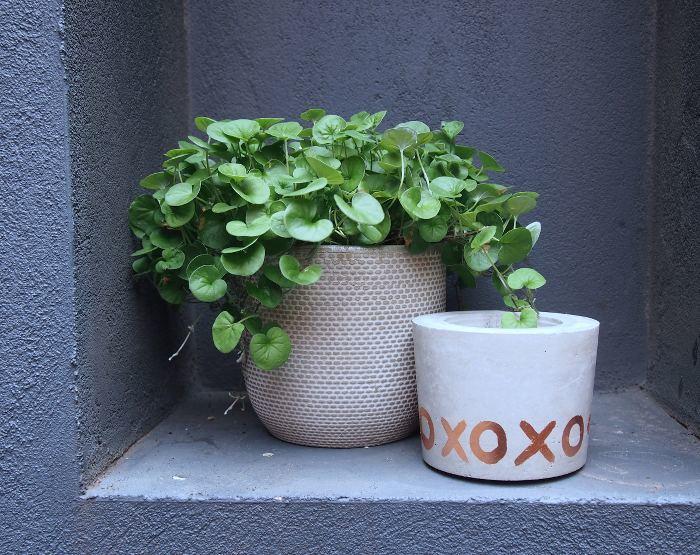 Peace of Me XOXO Pot