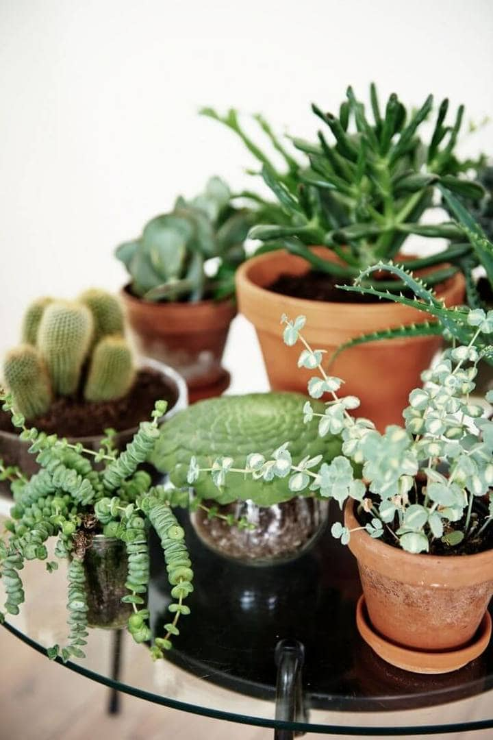 Country Kitchen Ideas - Indoor Plants - Cactus and Succulents