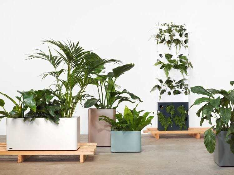 Indoor Plant Pots by Tait