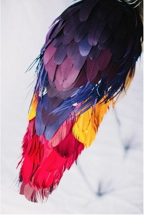 Bird Art - Feathers - by Diana Beltran Herrera