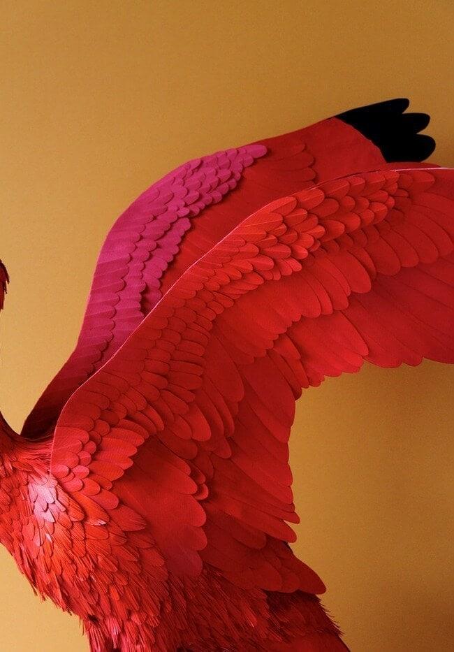 Bird Art by Diana Beltran Herrera - Flamingo