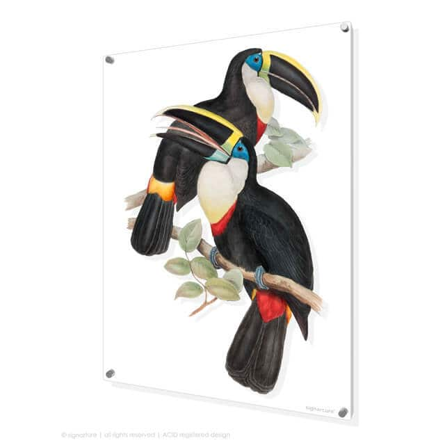 Toucan Art on Perspex by Signarture