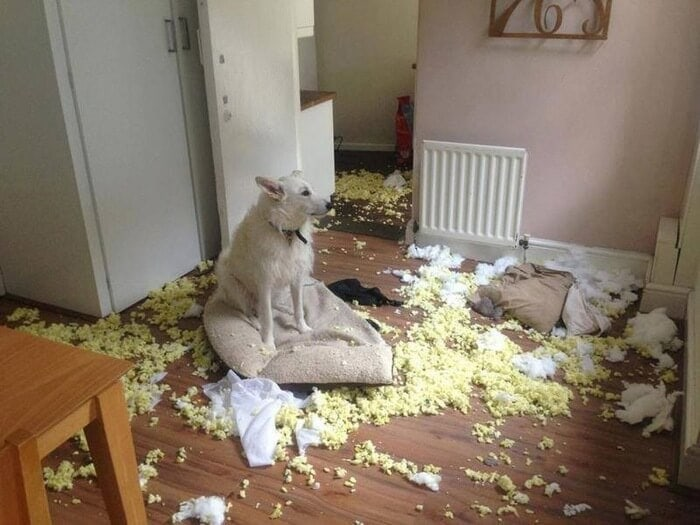 Dog Destruction in Dining Room
