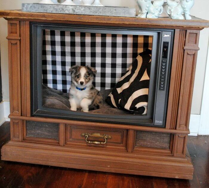 Dog in DIY TV set
