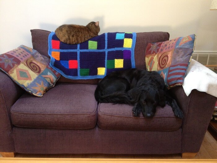 Dog on Sofa with Crochet Blanket