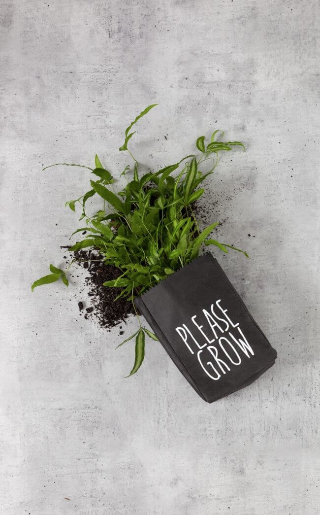 Please Grow Plant Bag from Zakkia