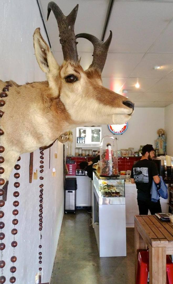 Daseti Cafe Thornbury - Taxidermy Deer Head