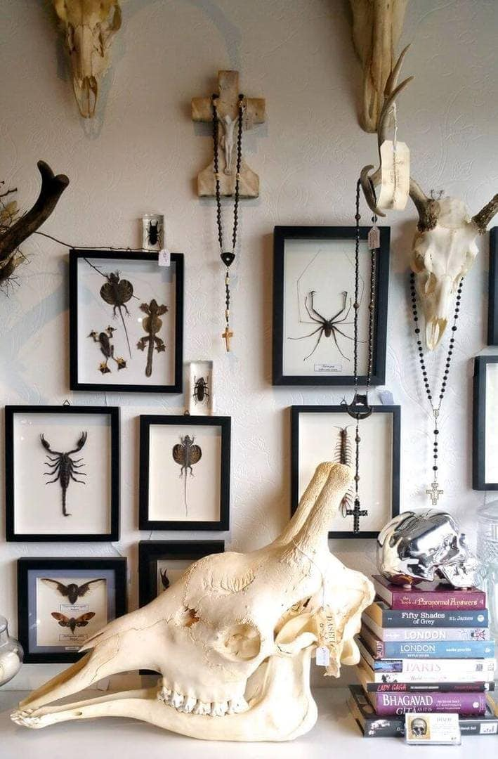 Daseti Cafe in Thornbury - Skulls and Insects on Wall - Taxidermy