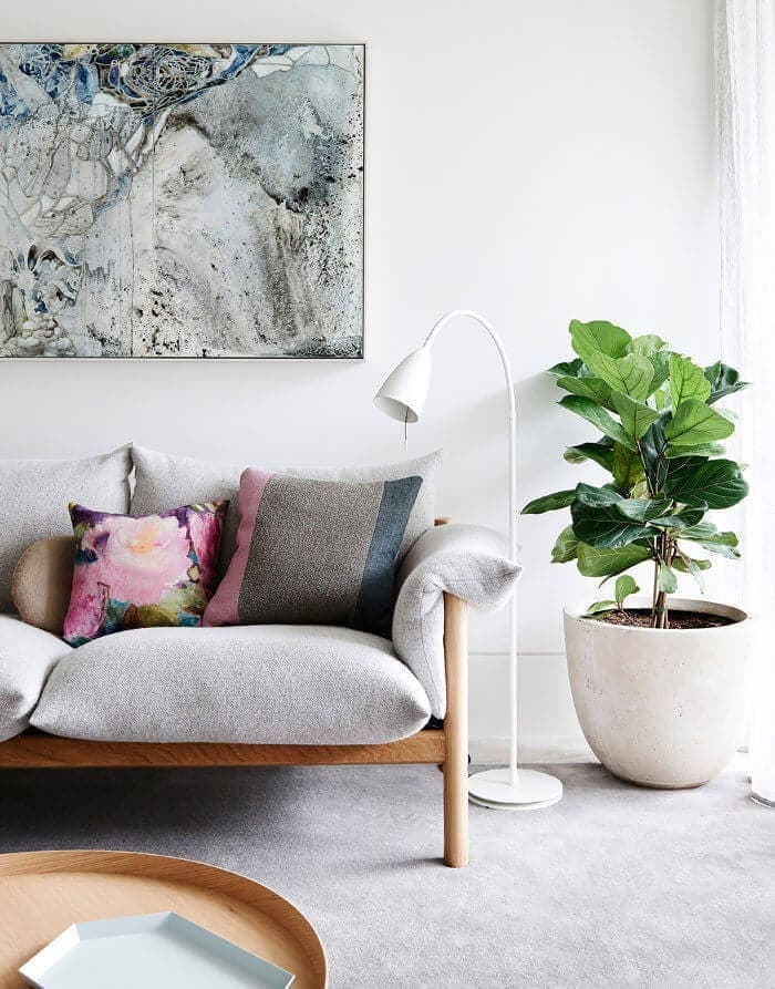 Indoor Plants - Indoro plant styling on TLC Interiors