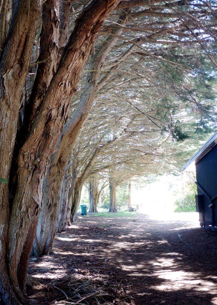 Mornington Peninsula Hotel Treelined Driveway