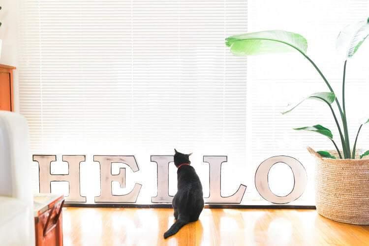 The Eclectic Creative Studio Pet the Cat