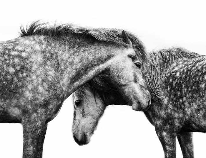 Horse Photo Print by Urban Road on The Life Creative Blog