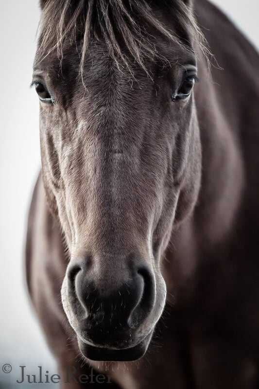 Julie Reter Horse Photography on The Life Creative