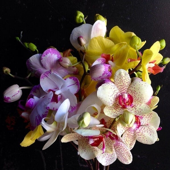 Coloured Orchids on The Life Creative Flower Styling Ideas