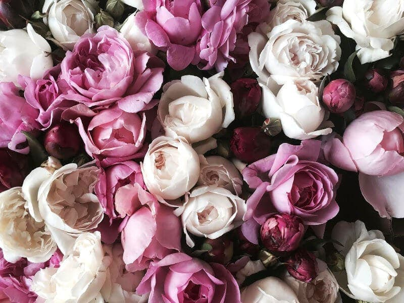 How to make flowers last longer on TLC Interiors