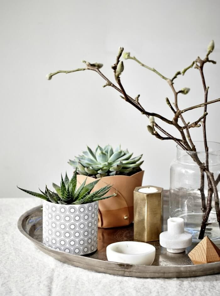 plant vignette on tray with cactus and succulent on TLC Interiors