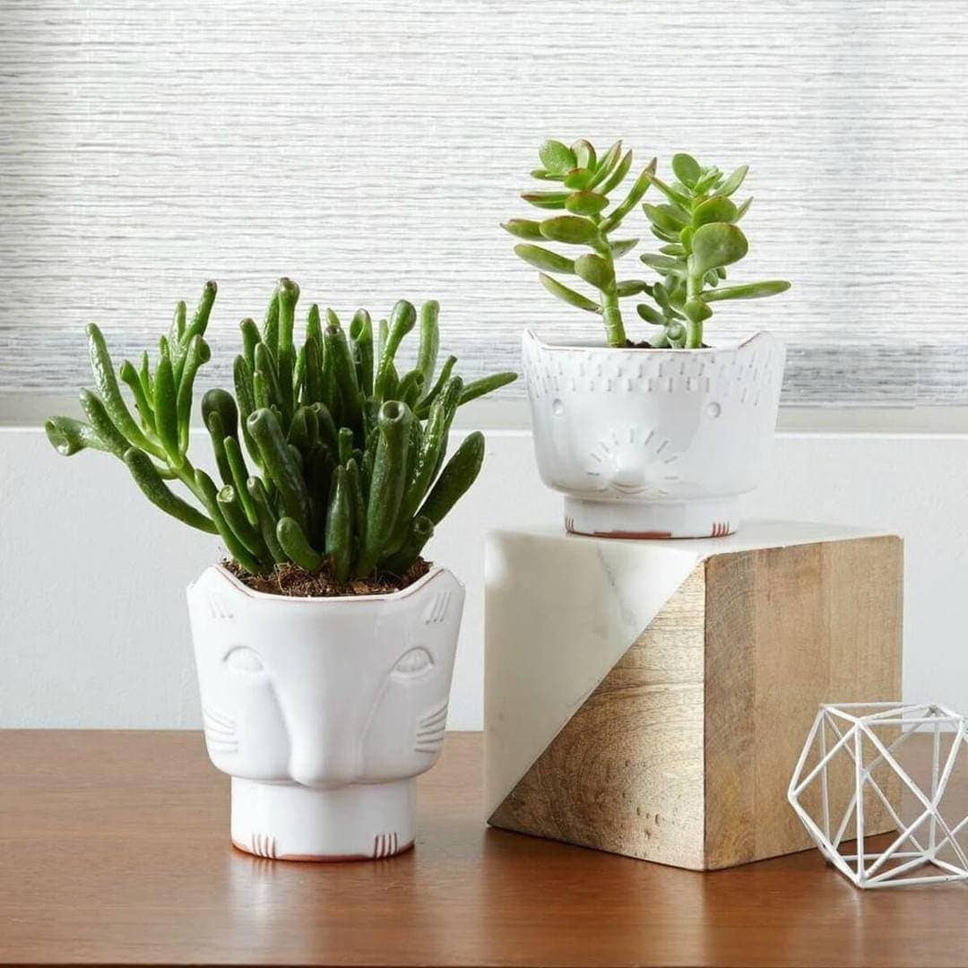 Cat planters from West Elm animal planters cat homewares on The Life Creative