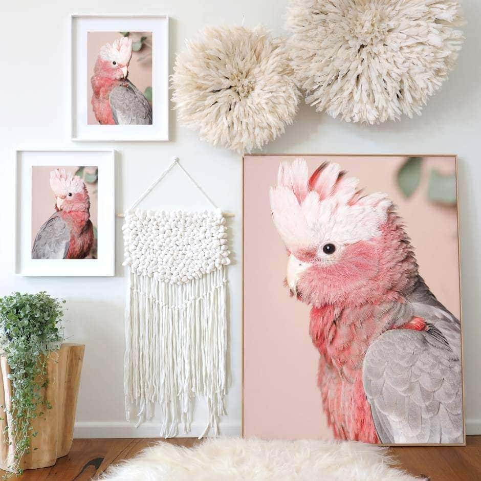 Amelia Anderson bird photography cupcake pinkie pink cockatoo art TLC Interiors