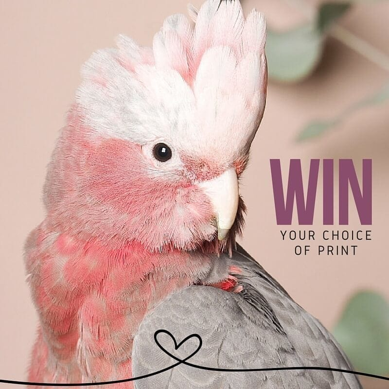 Win bird art by Amelia Anderson TLC Interiors