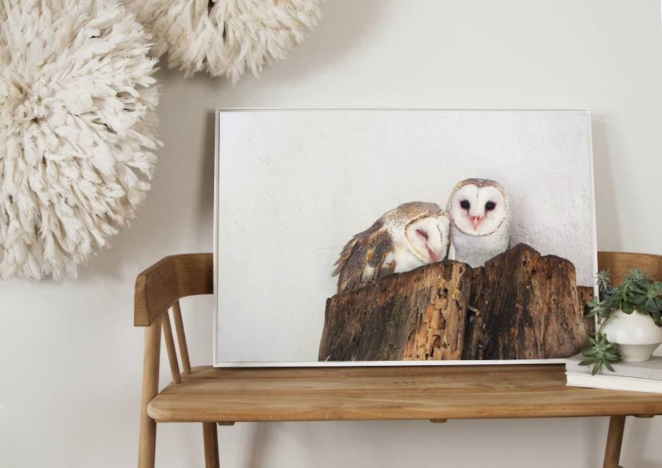 bird photography by Amelia Anderson barn owls TLC Interiors