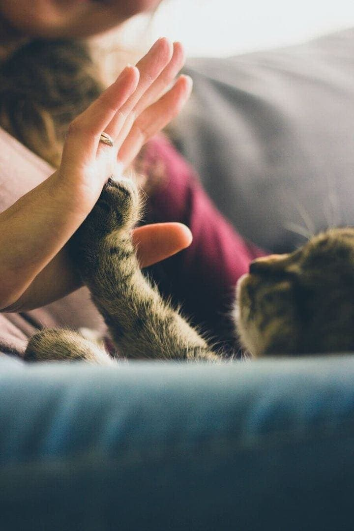 How to be Happy High Five your cat