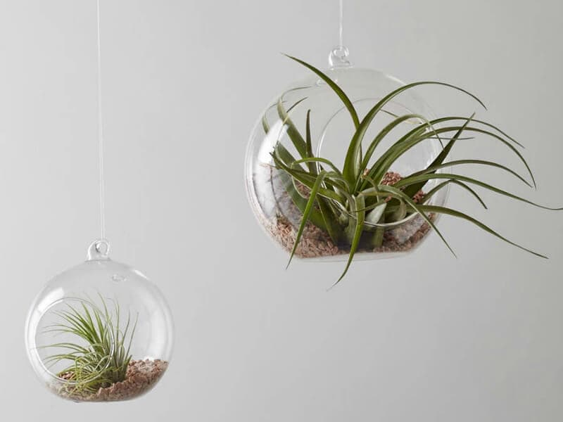 air plants in glass terrariums with peddles best indoor plants on the life creative