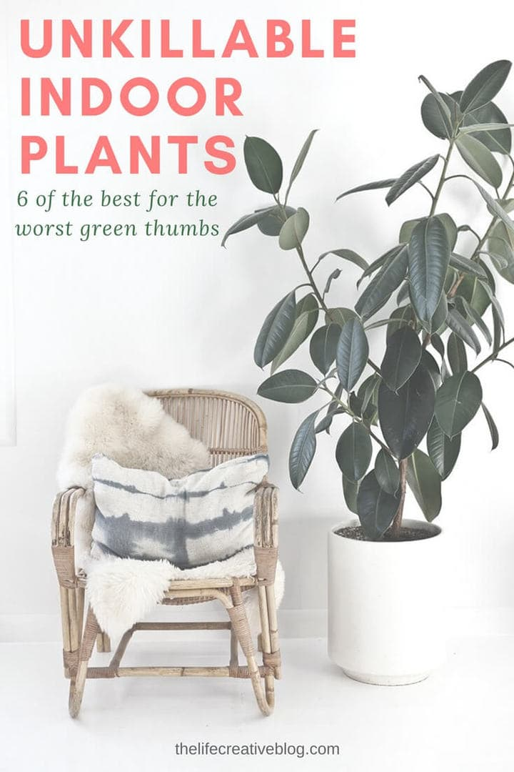 large indoor plant in white ceramic pot beside wicker rocking chair and shibori cushion pattern