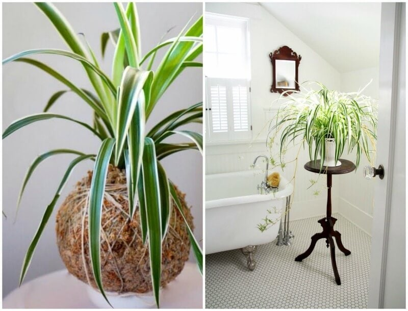spider-plant-decor-ideas the life creative best indoor plants