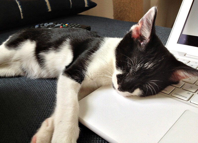 working-from-home-kitten-sleeping-on-laptop