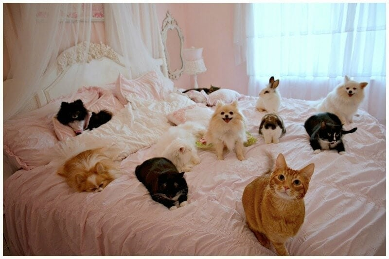cats dogs and rabbits sleeping on pink bedspread