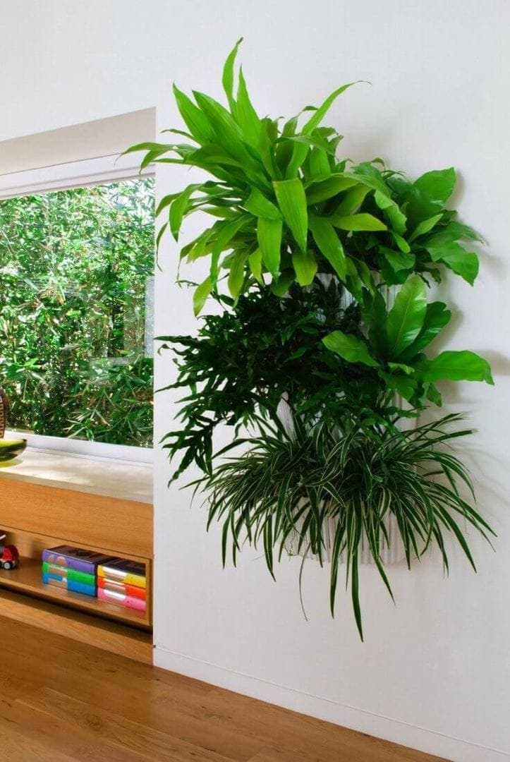 indoor vertical garden on white wall with timber flooring - hallway design