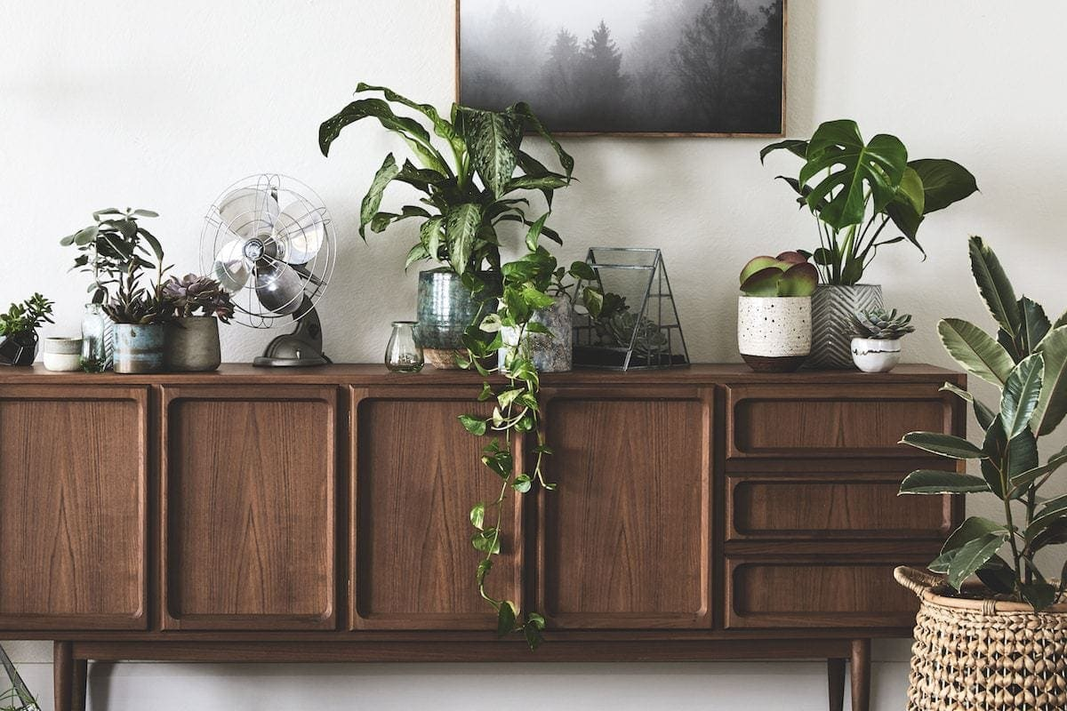 indoor plant sideboard styling ideas by sheridan