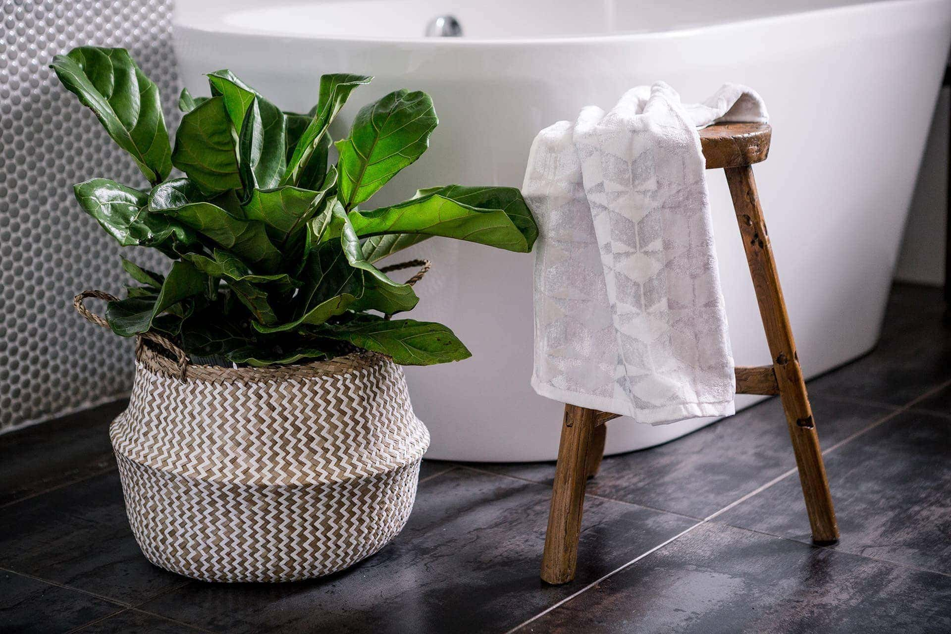 fiddle leaf fig in bathroom inside striped belly basket on dark bathroom floor