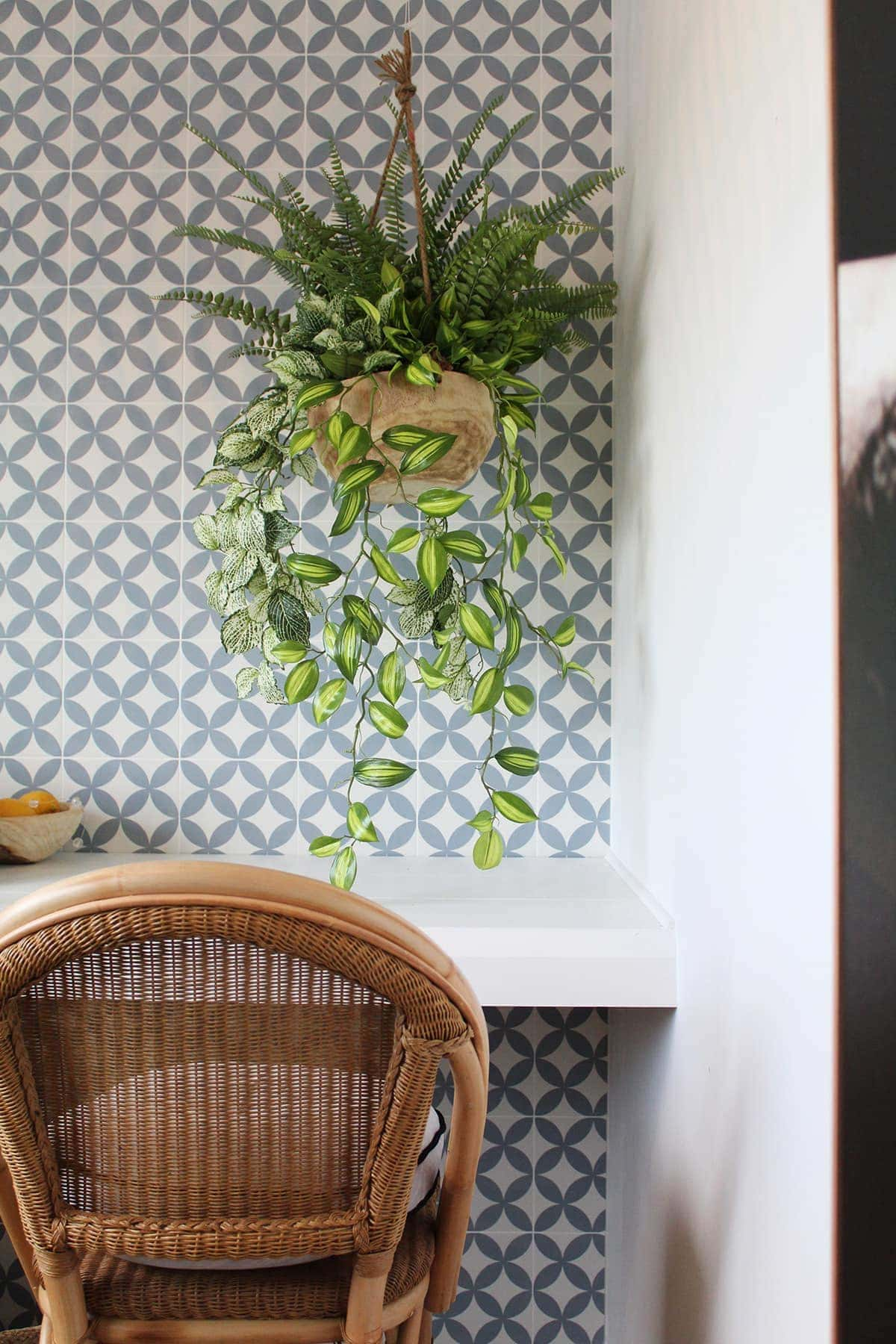 hamptons store blue and white geometric tile wall with hanging indoor plant