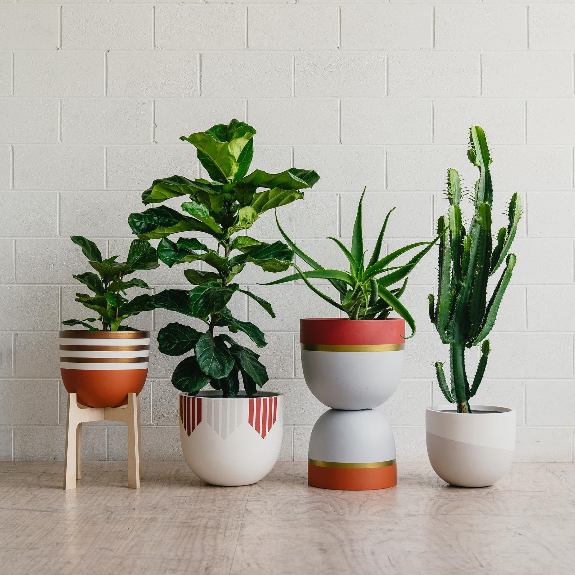 designer plant pots from toast and honey in terracotta white and gold
