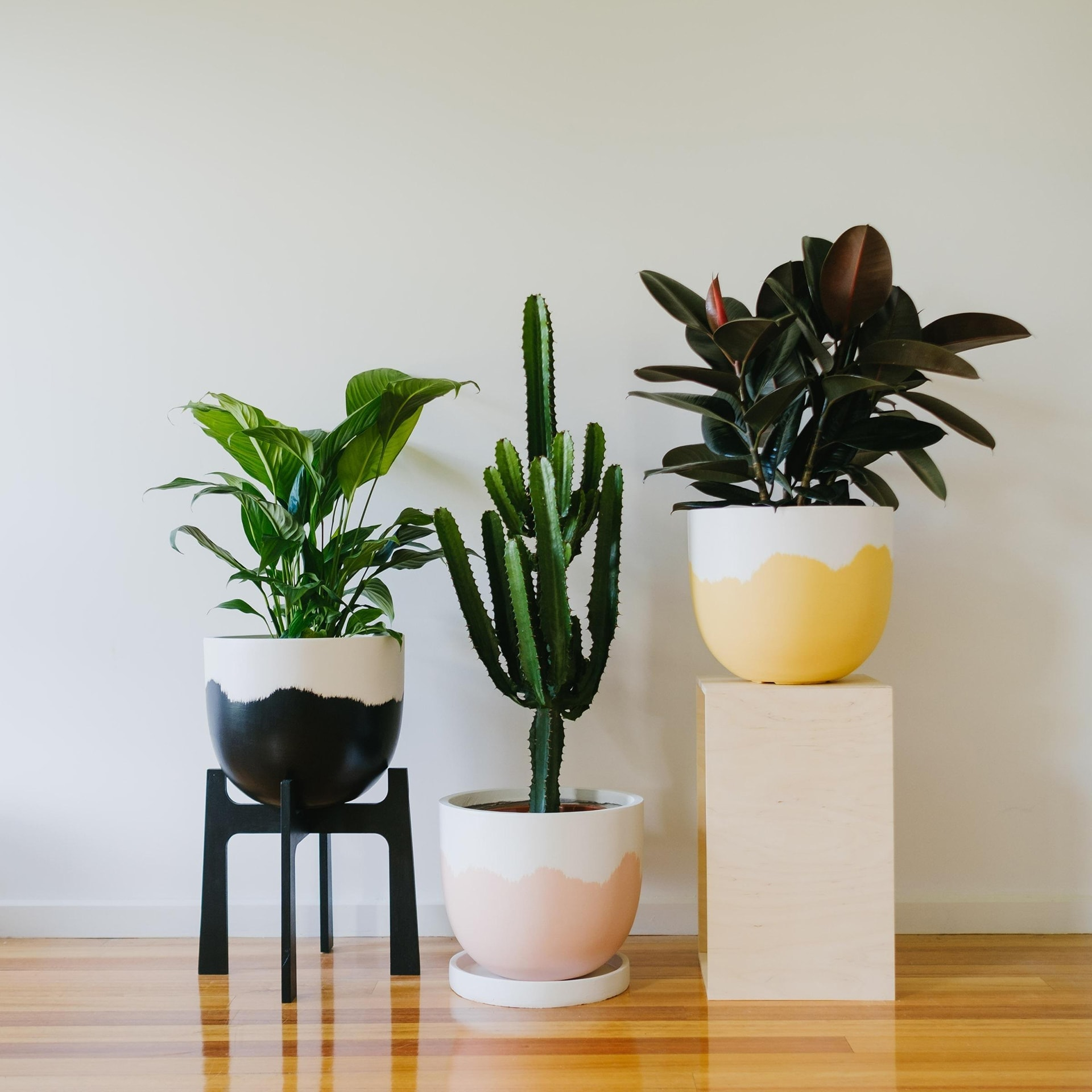 ombre painted plant pots from toast and honey studio