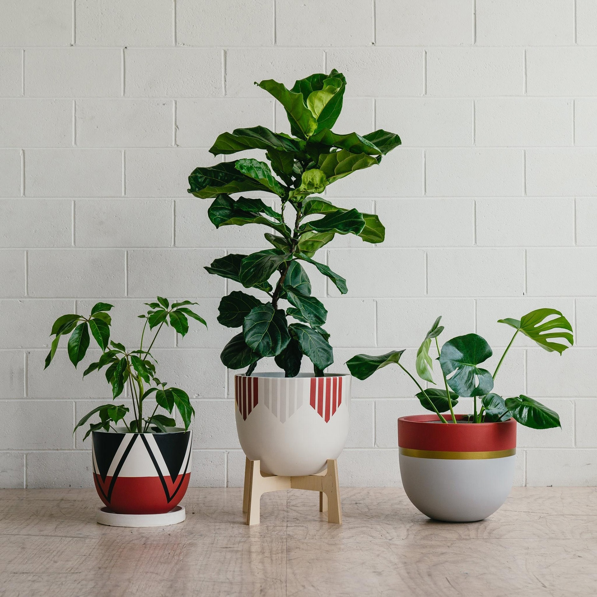 red and black designer plant pots from toast and honey