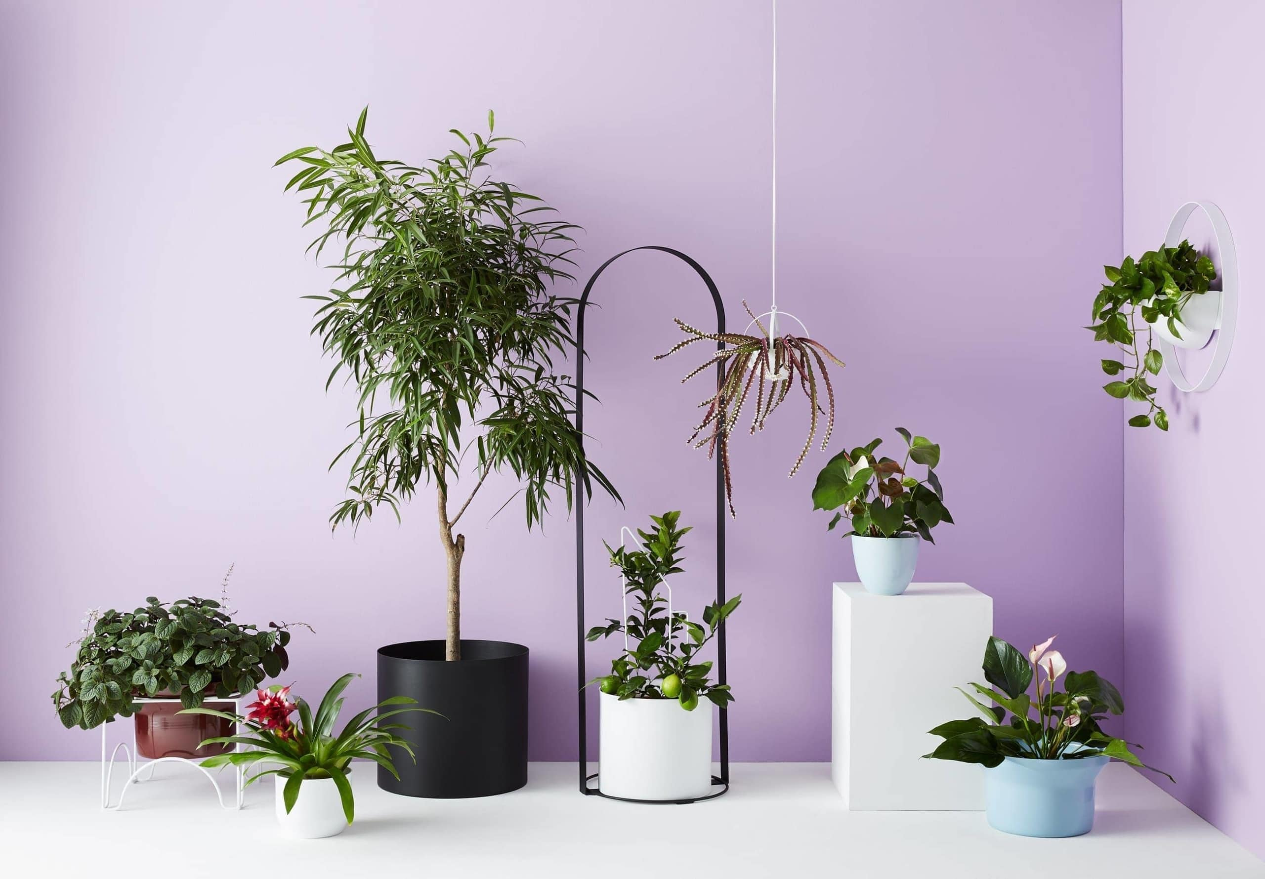 plant display ideas from ivy muse