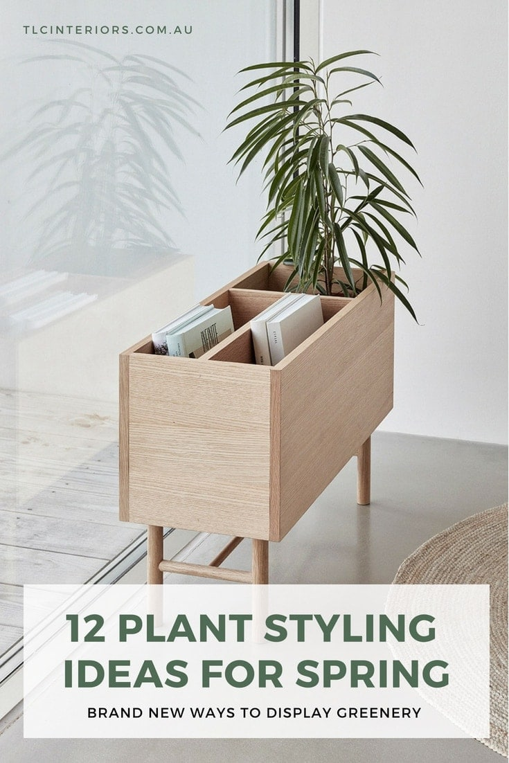plant styling ideas indoor pot display ideas