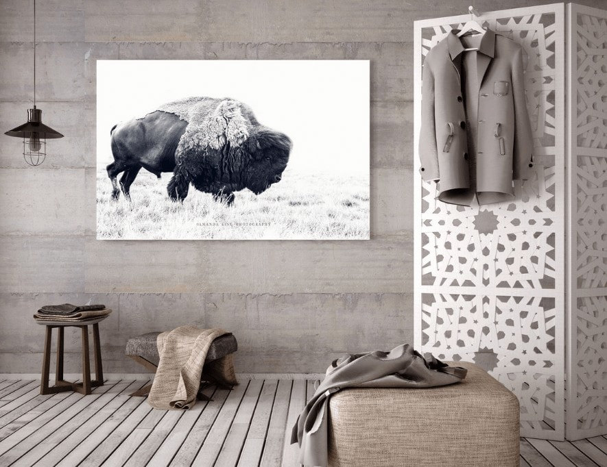 bison artwork in black and white by the horns