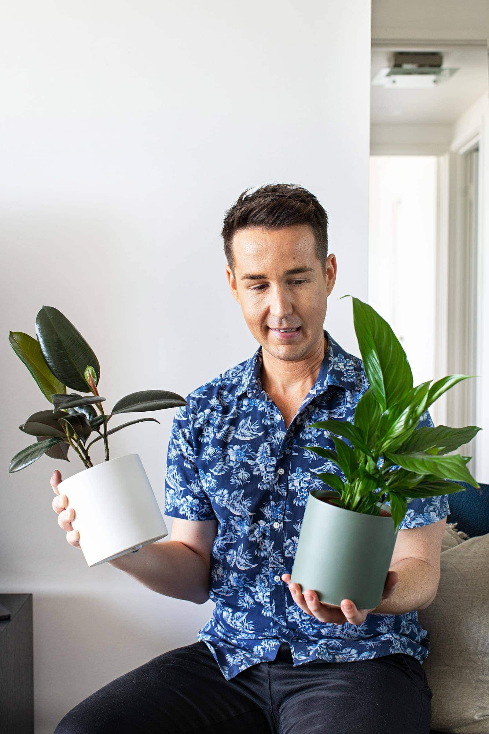 designer chris carroll indoor plants from bosque style indoor plant delivery service