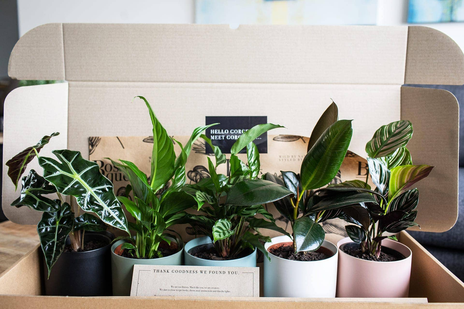 indoor plant delivery service bosque style five plants in coloured pots
