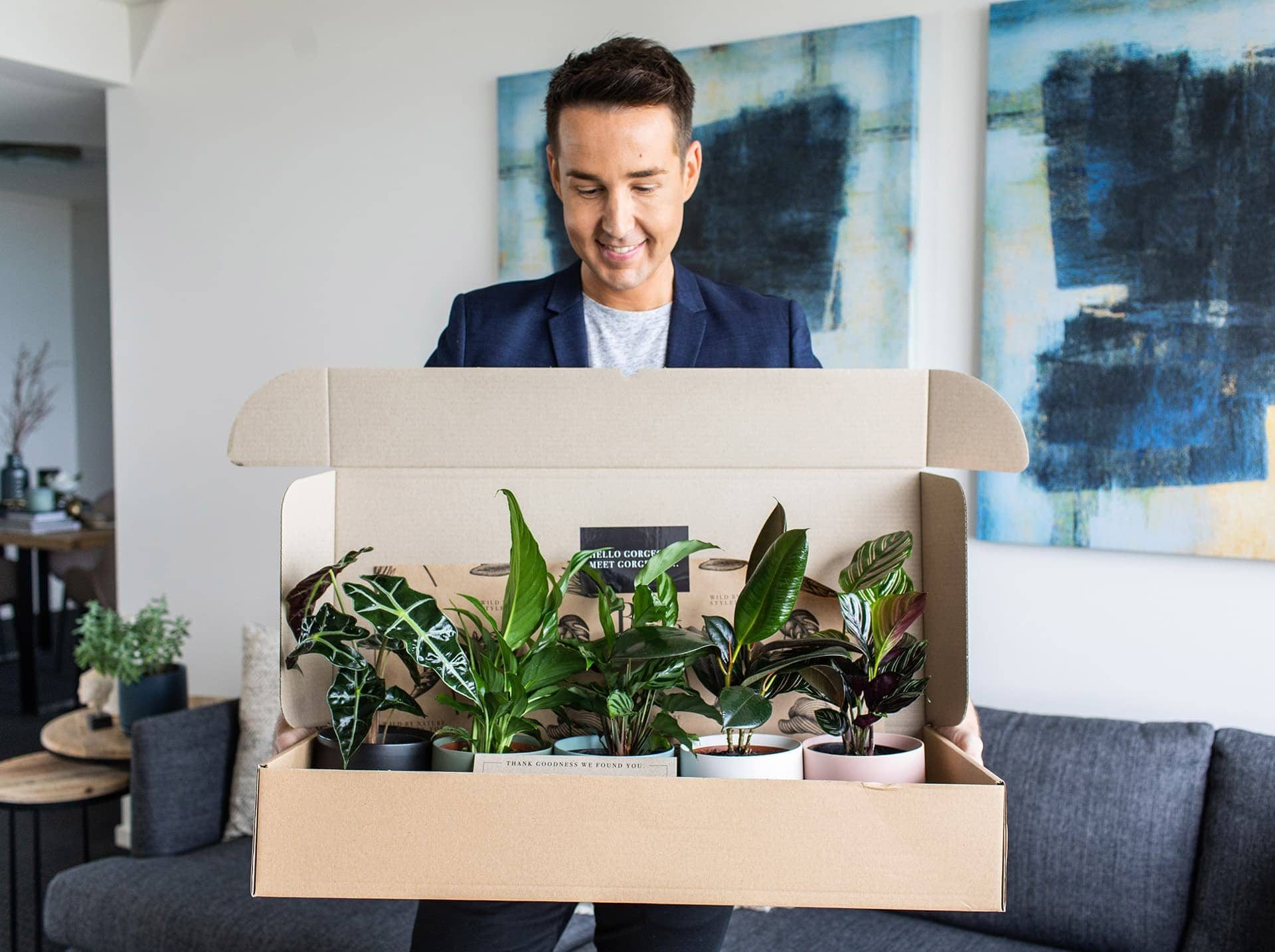 interior designer chris carroll indoor plant delivery bosque five plants delivered in coloured pots